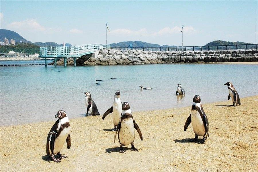 「ペンギン水族館」の画像検索結果