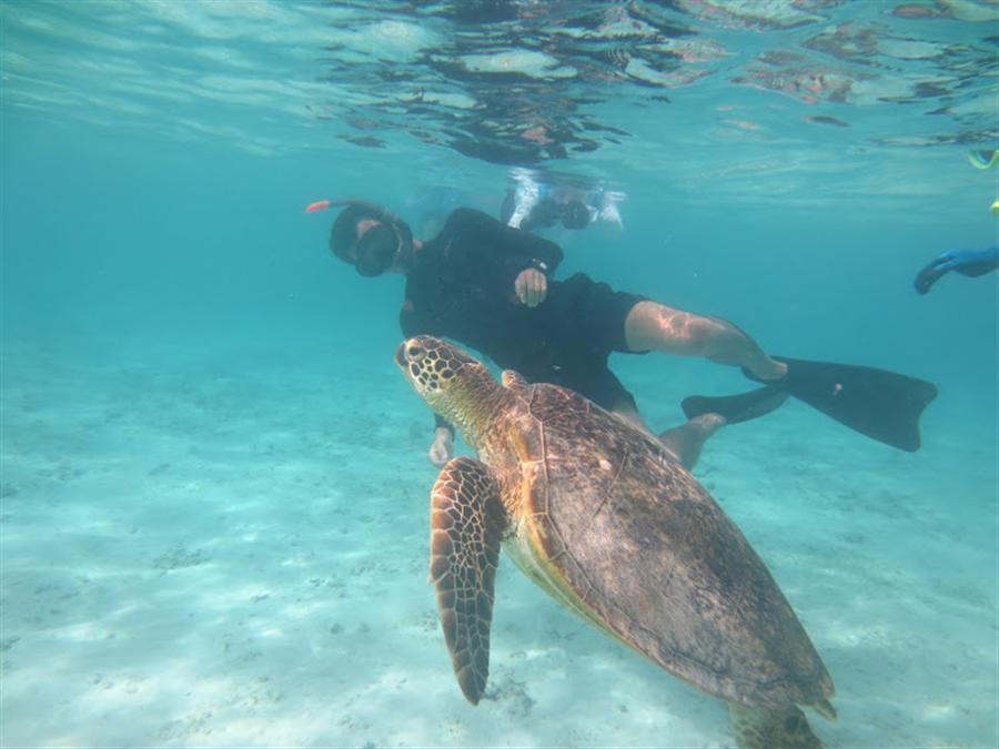 座間味島 龜的圖片搜尋結果
