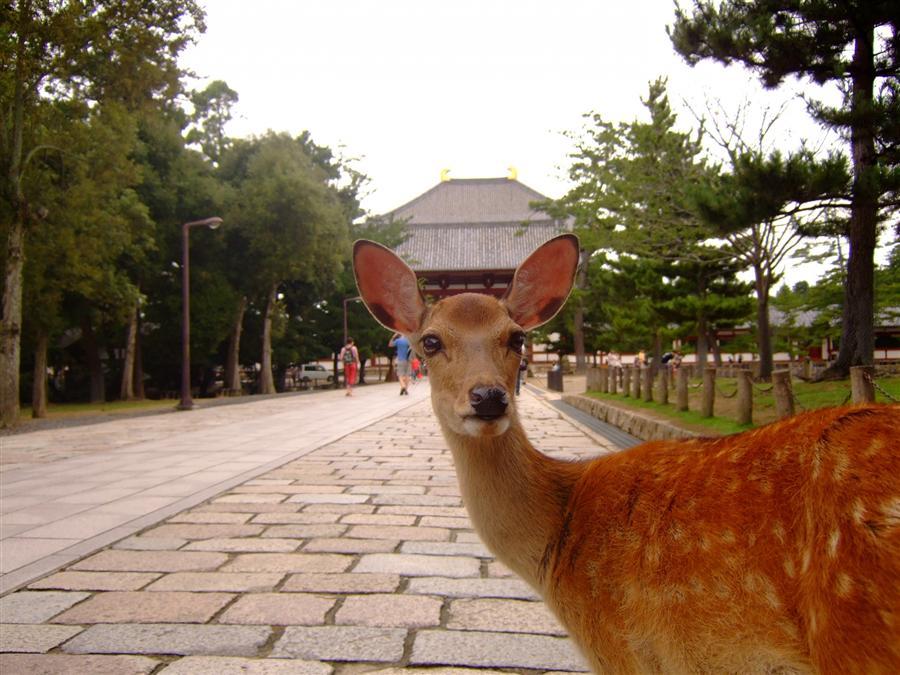 奈良公園的圖片搜尋結果