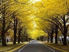 北海道旅行 10月のおすすめ情報