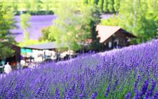北海道旅行 年間情報やおすすめ時期を紹介